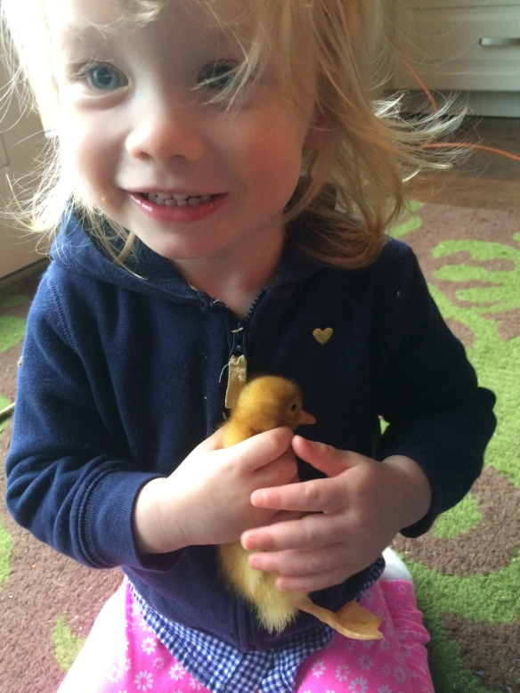 Pippa loving up on a ducky, hopefully a girl ducky